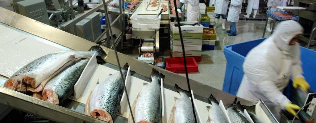 مستجدات الوظيفة : مطلوب تشغيل 300 عاملة لجمع المنتوجات البحري