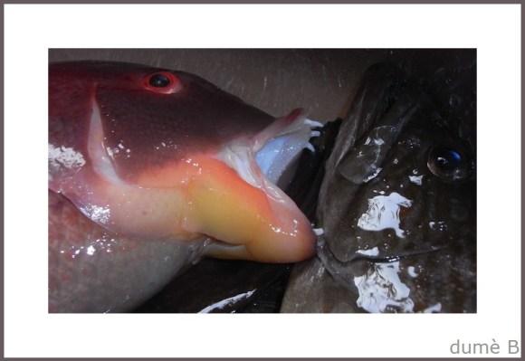 poisson-frais.jpg