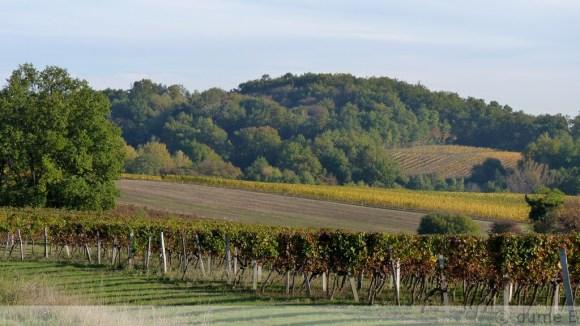 vineyard en automne
