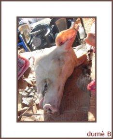 head-de-cochon