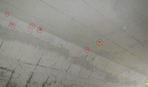 有料道路をくぐるトンネルの天井はハチの巣だらけ