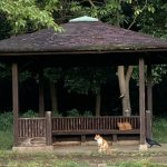 ネコと東屋とカラス