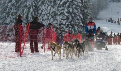 sled race