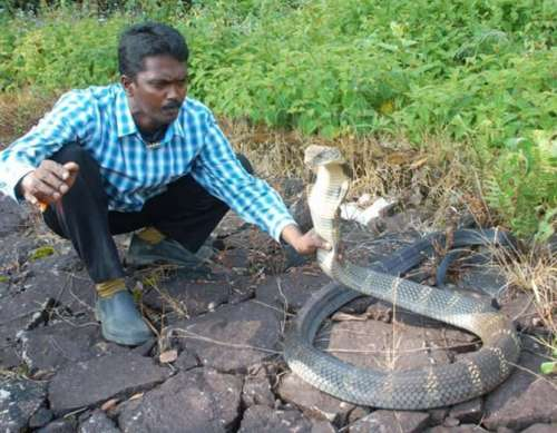 snake catcher vava suresh