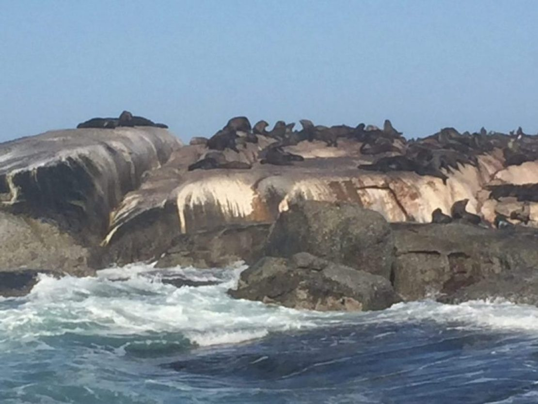 Seals hout bay cape town