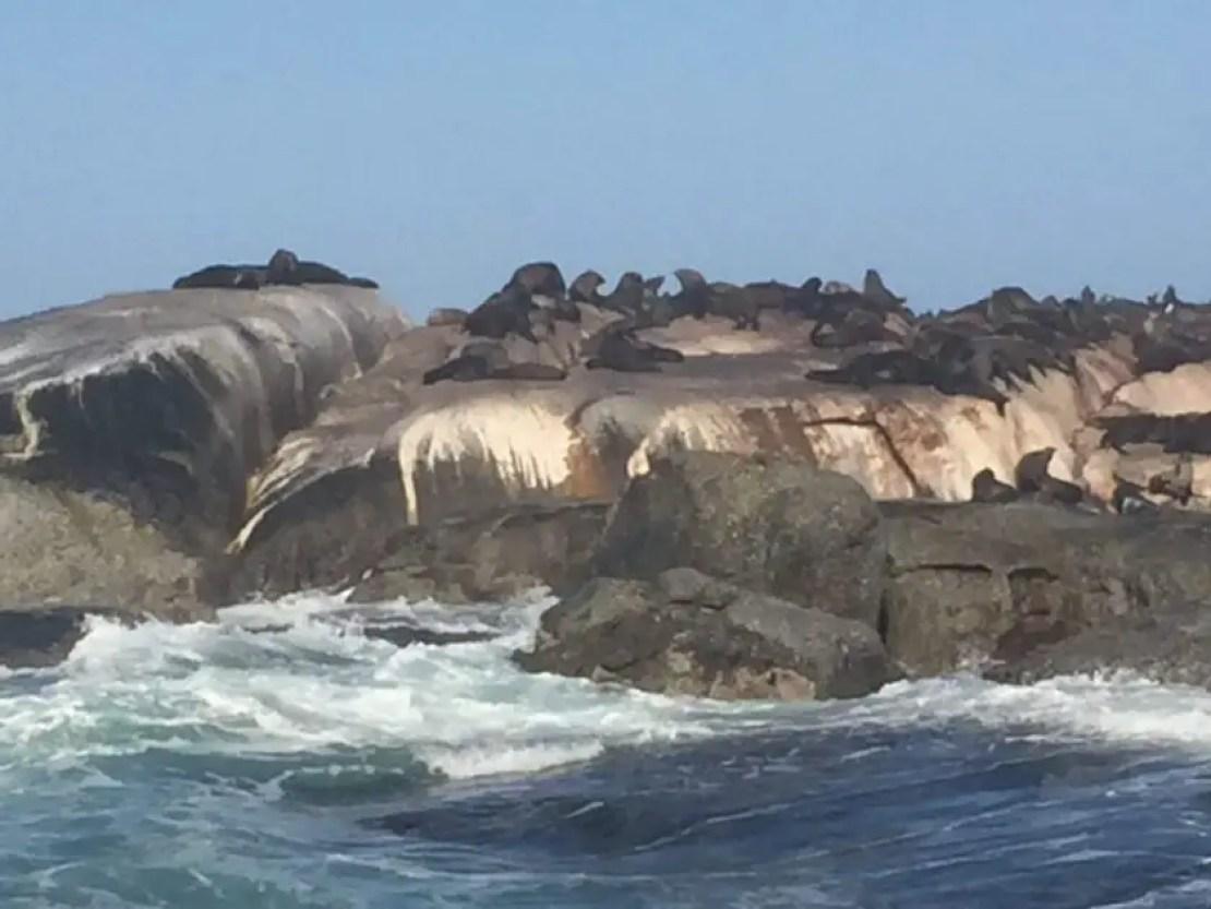 Seals hout bay cape town