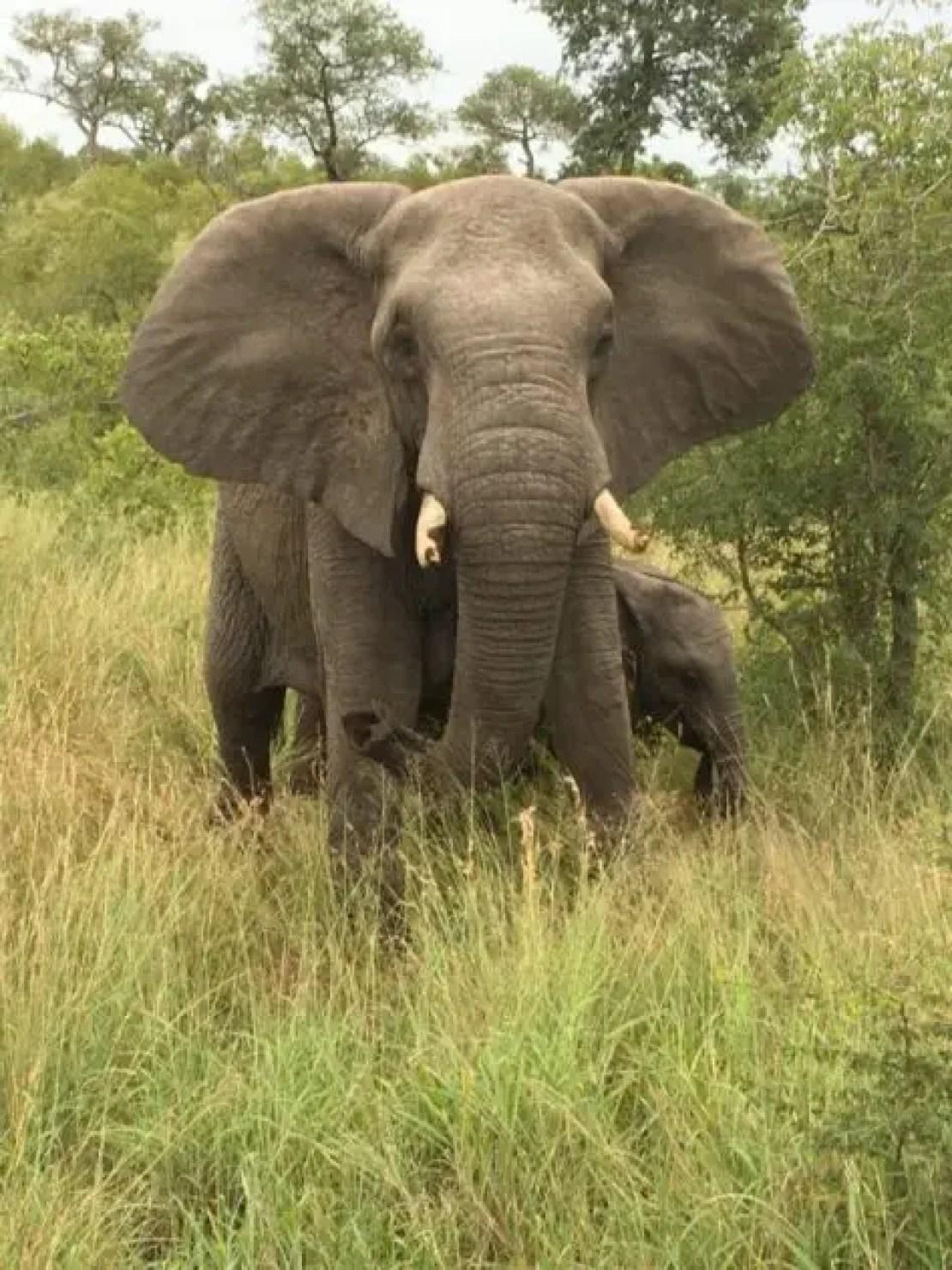 Safari Sabi sands elephants Savanna Lodge