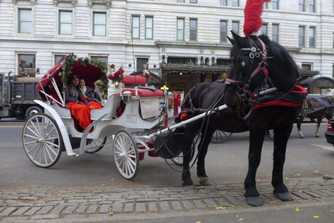 Central park horse and carriage
