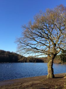 Beautiful Sutton Park