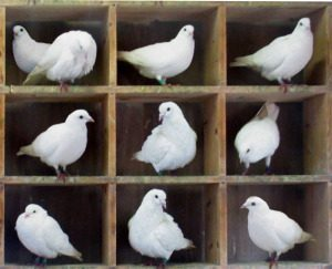 10 pigeons in 9 holes means that at least one hole is shared.