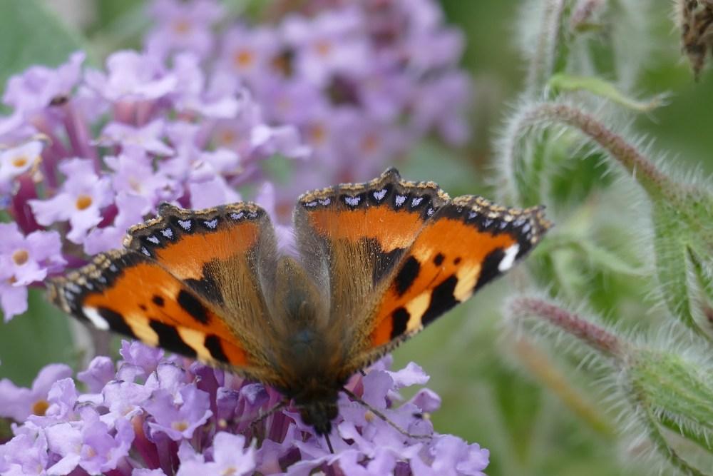 Butterfly Bonanza (2/6)