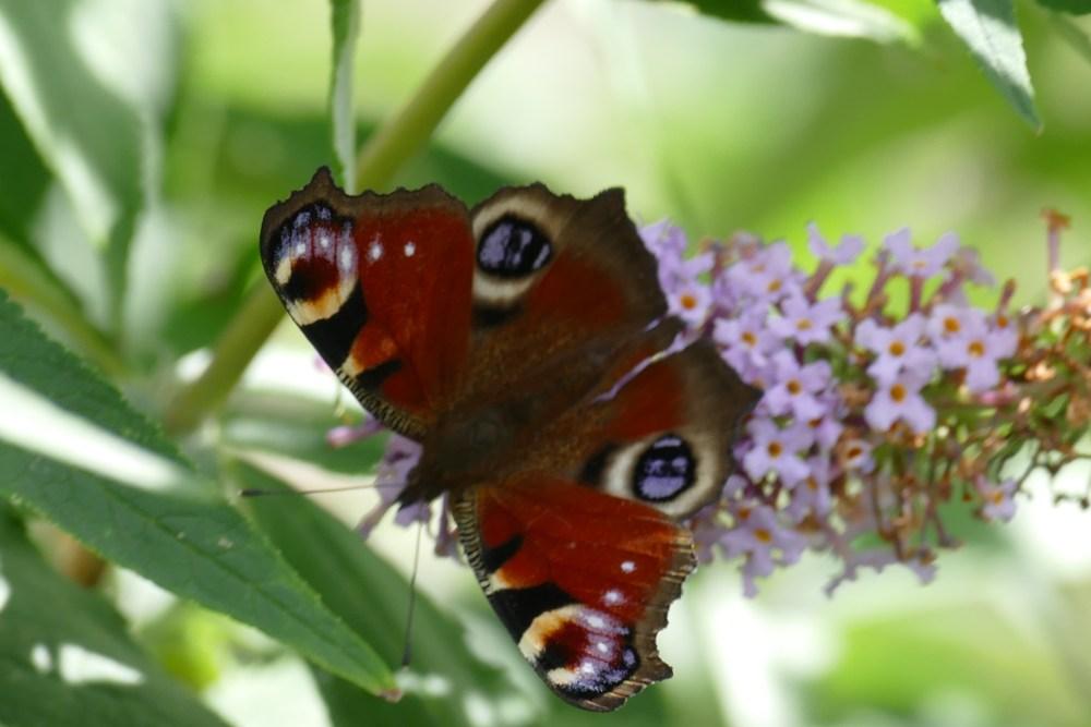 Butterfly Bonanza (6/6)
