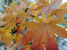aux couleurs de l'automne