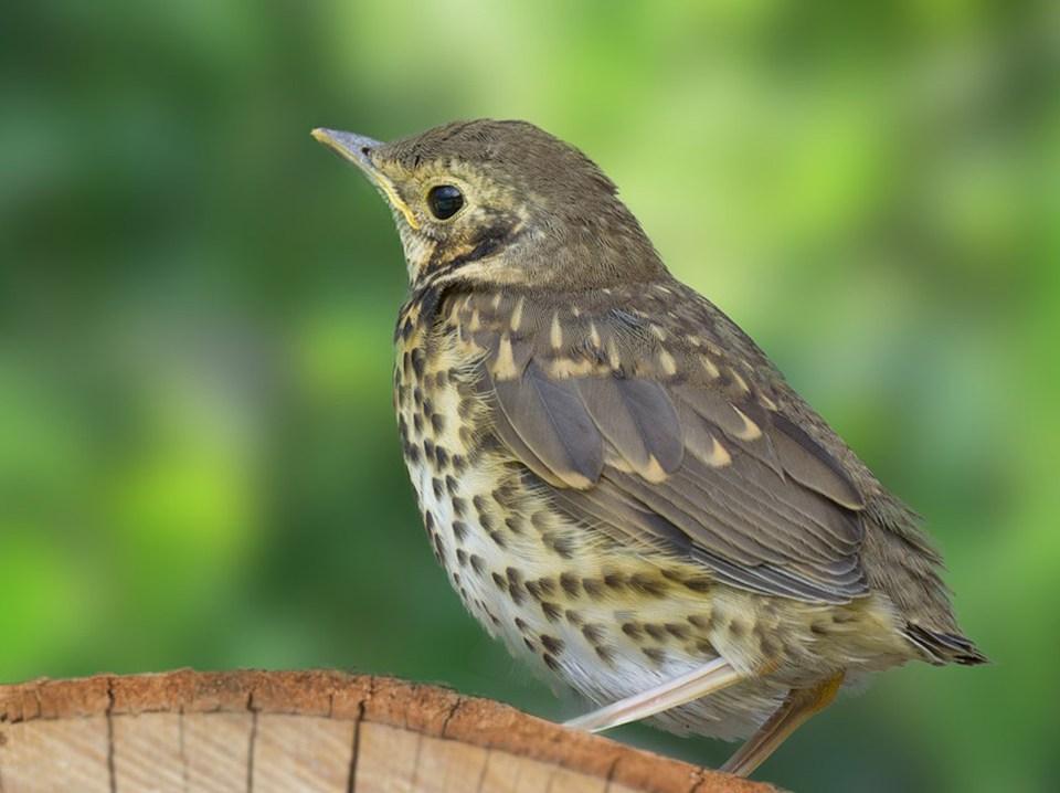 Vogelcursus