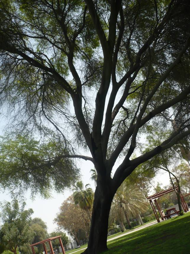 Al Safa Park in Dubai, UAE (3/6)