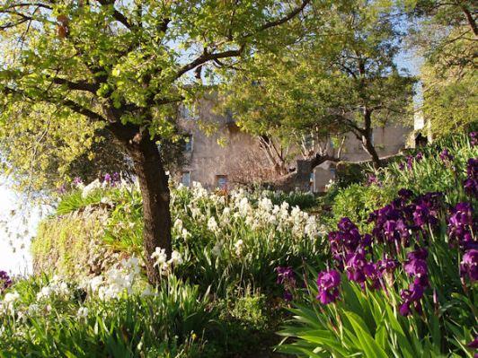 la maison et le jardin au printemps avec les iris en fleur