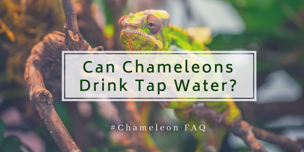 chameleon drinking system