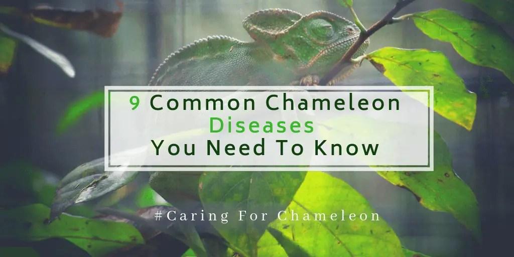 Chameleon Diseases