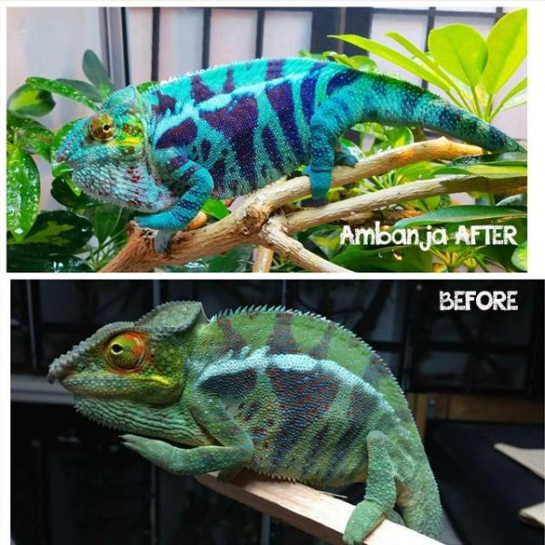 Ajax-before-and-after2