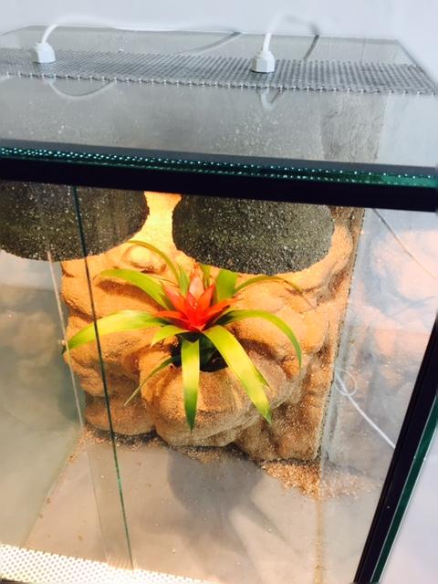 Terárium pro chameleony 40x40x60 cm