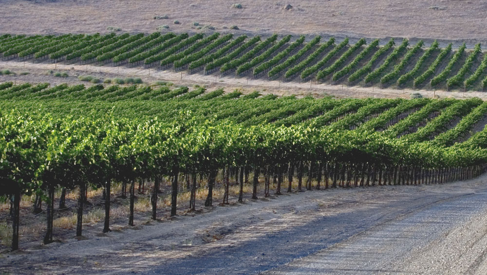 Eileen Callahan of Champagne Travels Luxury Travel Website writes about White Wine 101