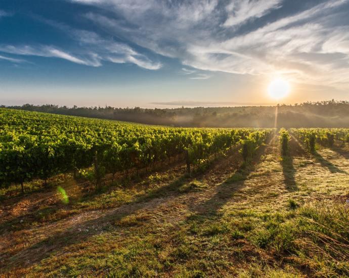barolo-wijn