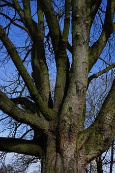 tree-274964__340
