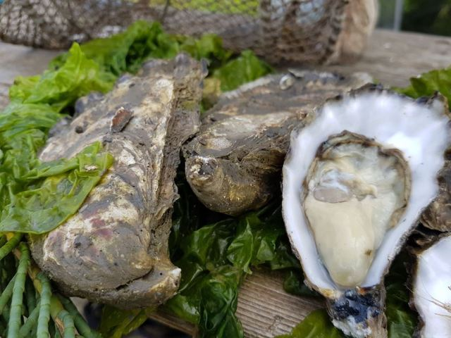 huitres ostras oysters