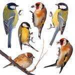 A mess of winter feeders