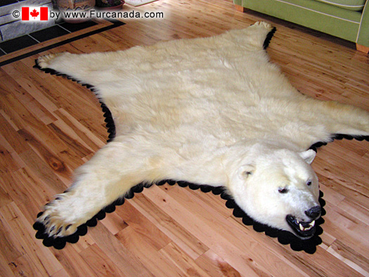 bear-skin-rugs-polar-bear-F1