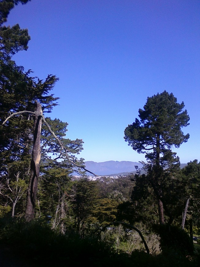 View over a dead tree on Strawberry Hill Photo: PK Read