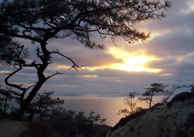 View from Torrey Pines reserve Photo: Norman Koren