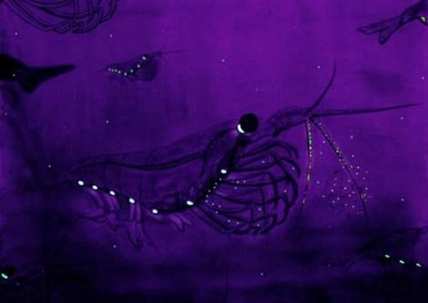 Krill (watercolor) Source: Wikipedia