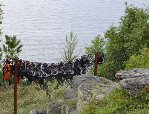 Bicycle helmets line a fence along a hiking path. No cycles or cyclists in sight.  Photo: PK Read