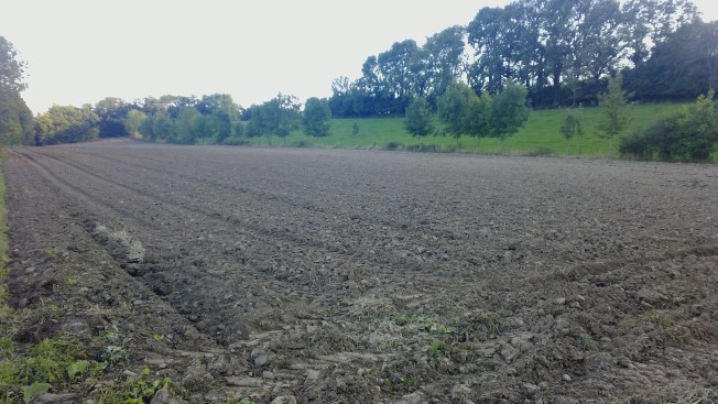 Autumn field, just plowed for winter planting. Photo: PK Read