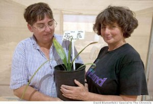 Researchers Elaine Solowey (left) and Sarah Sallon hold the young seedling.  Photo: David Blumenfeld