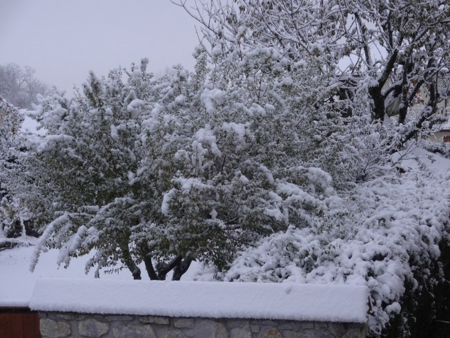 Early morning garden, first snow. Photo: PK Read