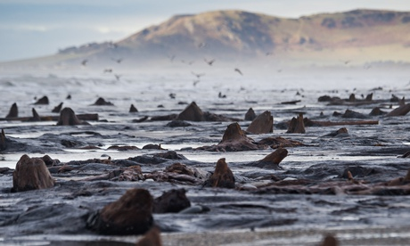 The remnants of the Borth forest. Photo: Keith Morris/LNP