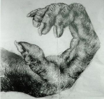 Chimpanzee hand Artist: Lisa Roet