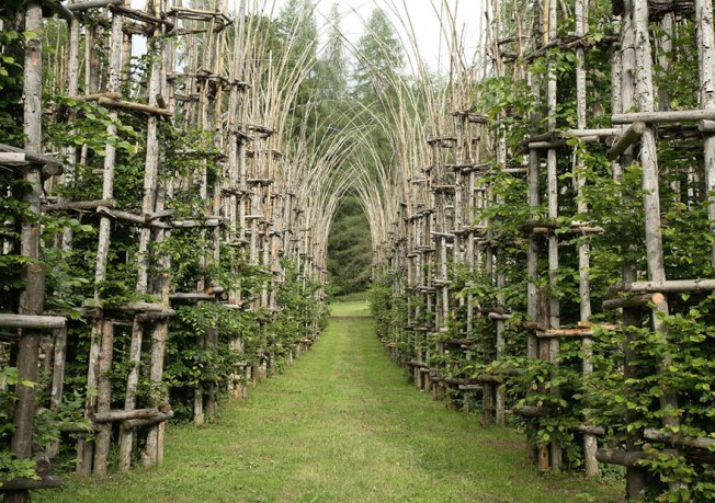 Tree Cathedral, a living installation in Bergamo, Italy. The foundation was laid in 2001, and following Mauri's death in 2009, the Cattedrale Vegetale has been completed as a monument to his work and life. Image:  Virtual Sacred Space