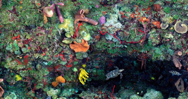 """Great Wall West"", shear coral reef wall Little Cayman Island Photo: Jim Hellemn"