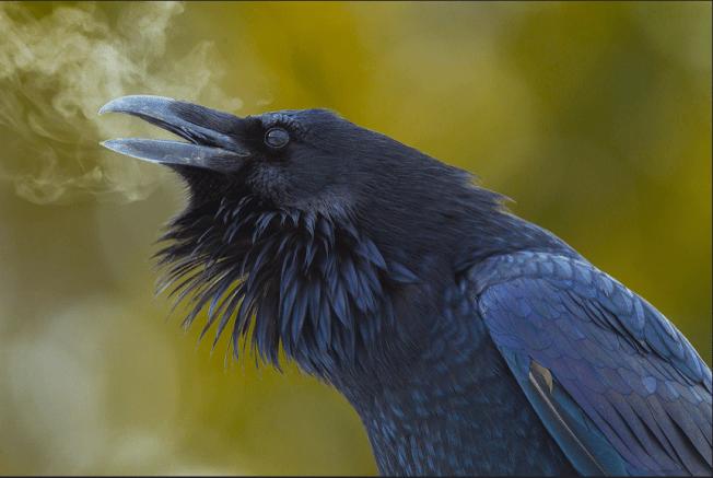 Raven's Breath Photo: Doug Dance