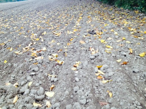 Fallen leaves on bare furrows. All photos: PKR