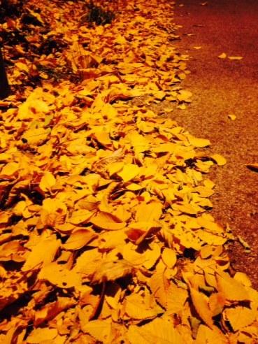Fallen leaves under a village streetlamp.