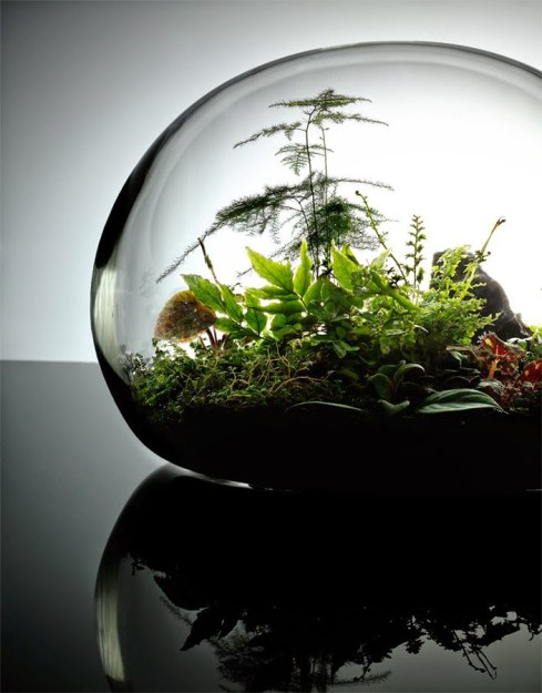 Jeffrey James terrarium. Photo: Carlton/Jeffrey James