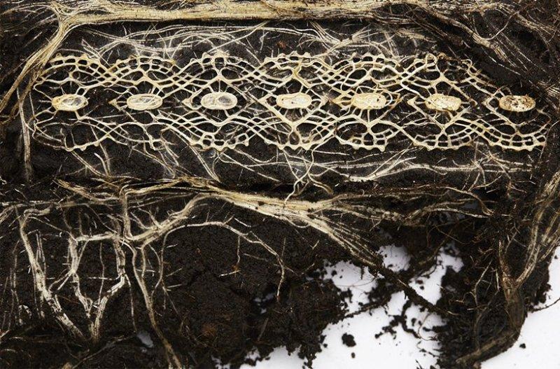 Scherer, plants, Earth Day, tapestries, earh art