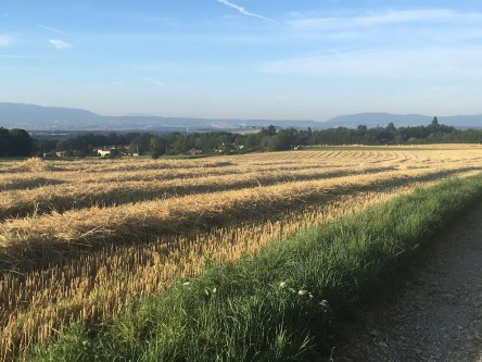 France, field, wheat, summer