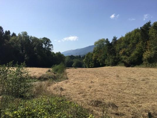 Dry golden pasture, mountains, Jura, running