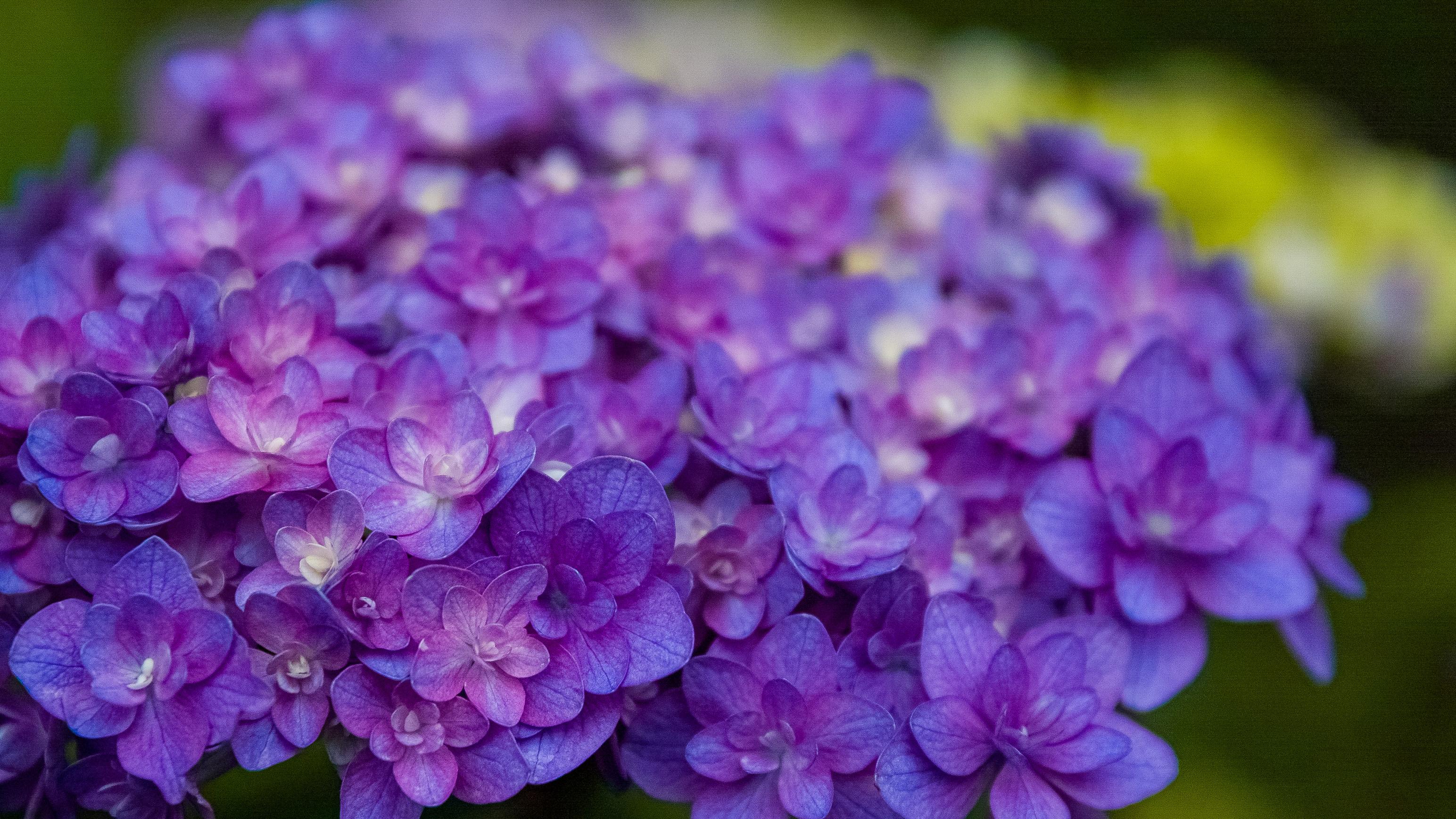 吹越 広彬, Fukikoshi Hiroaki, champs des lilas, シャンデリラ,三沢市,松園町,美容室,