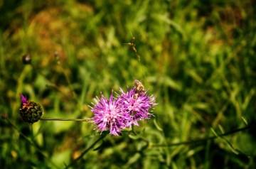 Honey Bee Snowballs